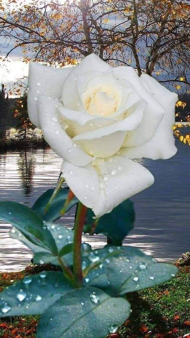 immagini-buongiorno-fiori_01