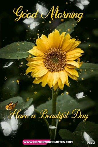 immagini-buongiorno-fiori_10