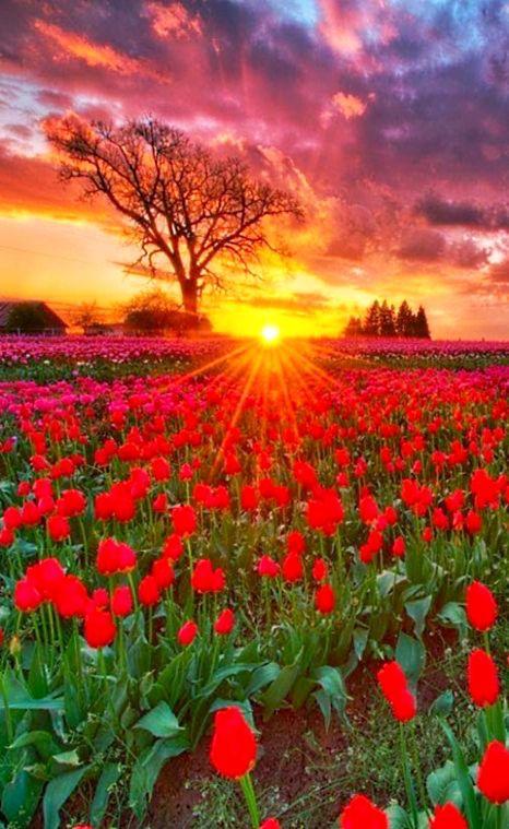immagini-buongiorno-fiori_16