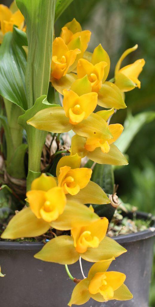 immagini-buongiorno-fiori_18