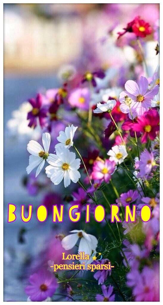immagini-buongiorno-fiori_20