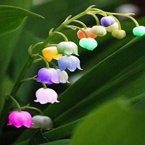 immagini-buongiorno-fiori_24
