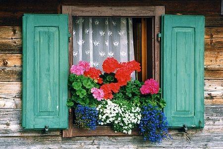 immagini-buongiorno-fiori_30