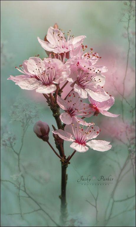 immagini-buongiorno-fiori_32