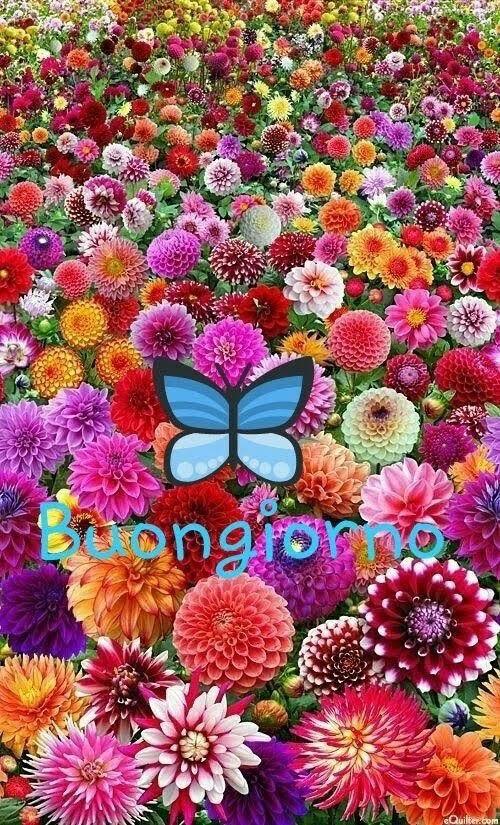 immagini-buongiorno-fiori_36