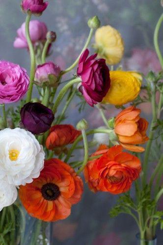 immagini-buongiorno-fiori_37