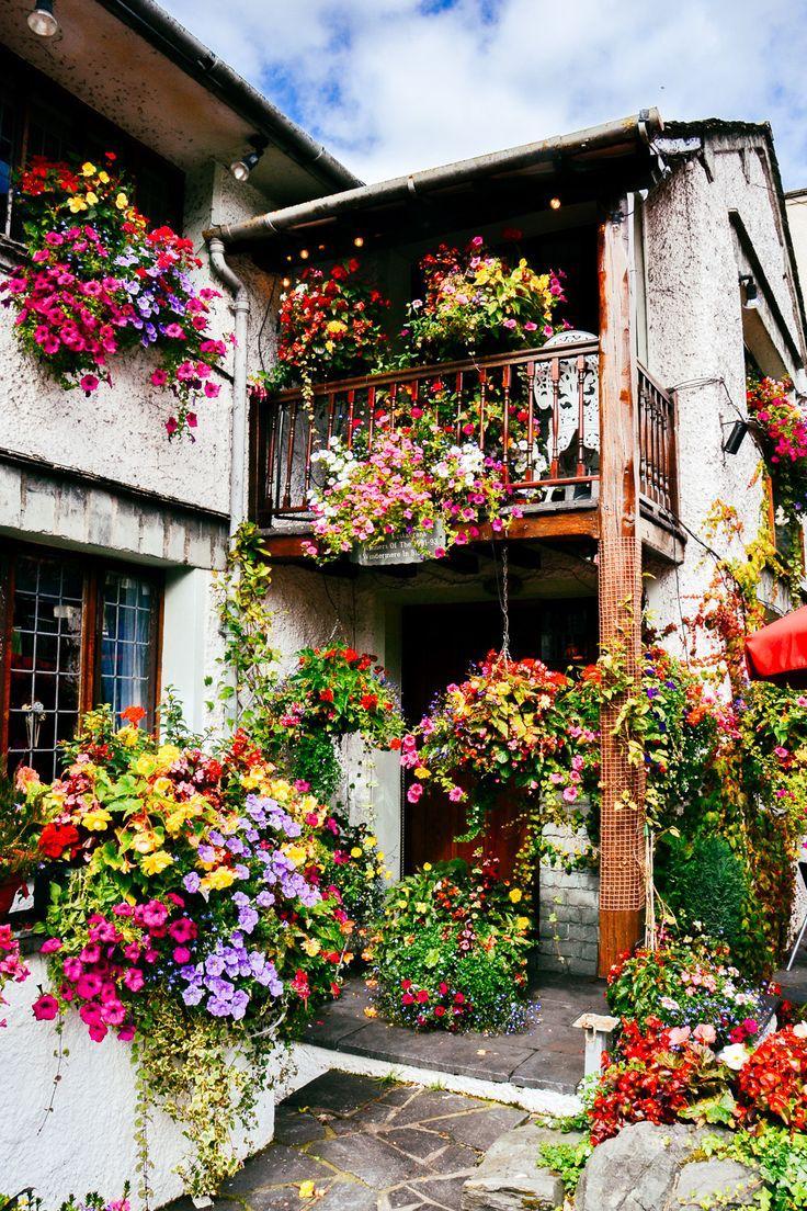 immagini-buongiorno-fiori_40
