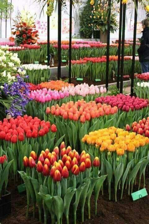 immagini-buongiorno-fiori_45
