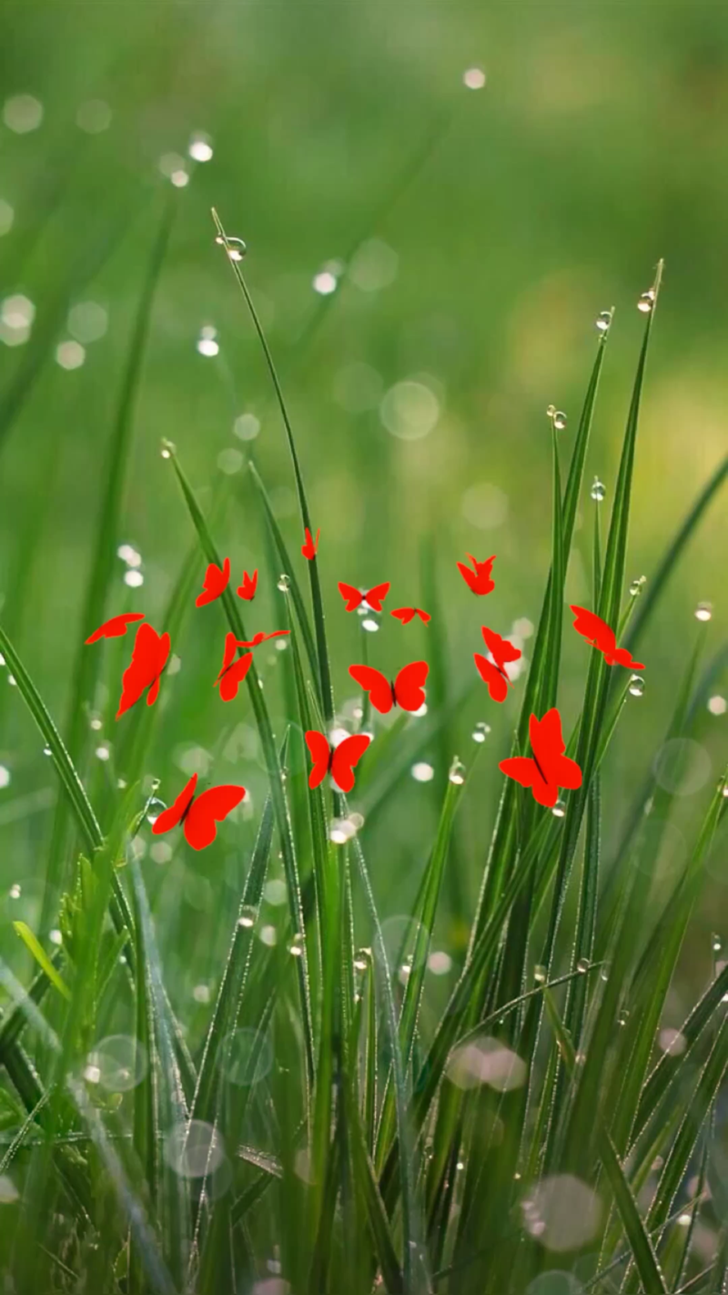 immagini-buongiorno-fiori_48