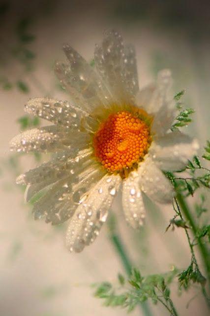immagini-buongiorno-fiori_49