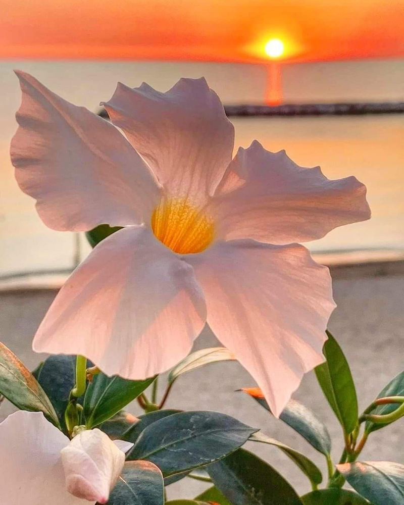 immagini-buongiorno-fiori_50