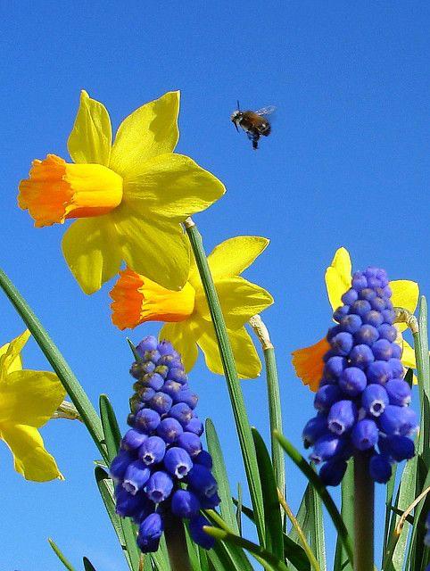 immagini-buongiorno-fiori_51