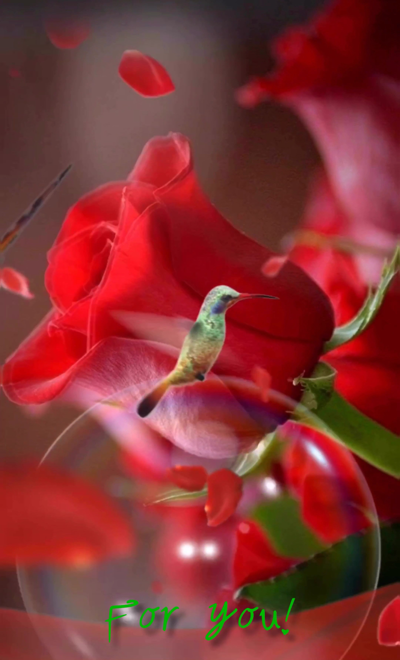 immagini-buongiorno-fiori_53