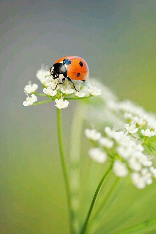 immagini-buongiorno-fiori_57
