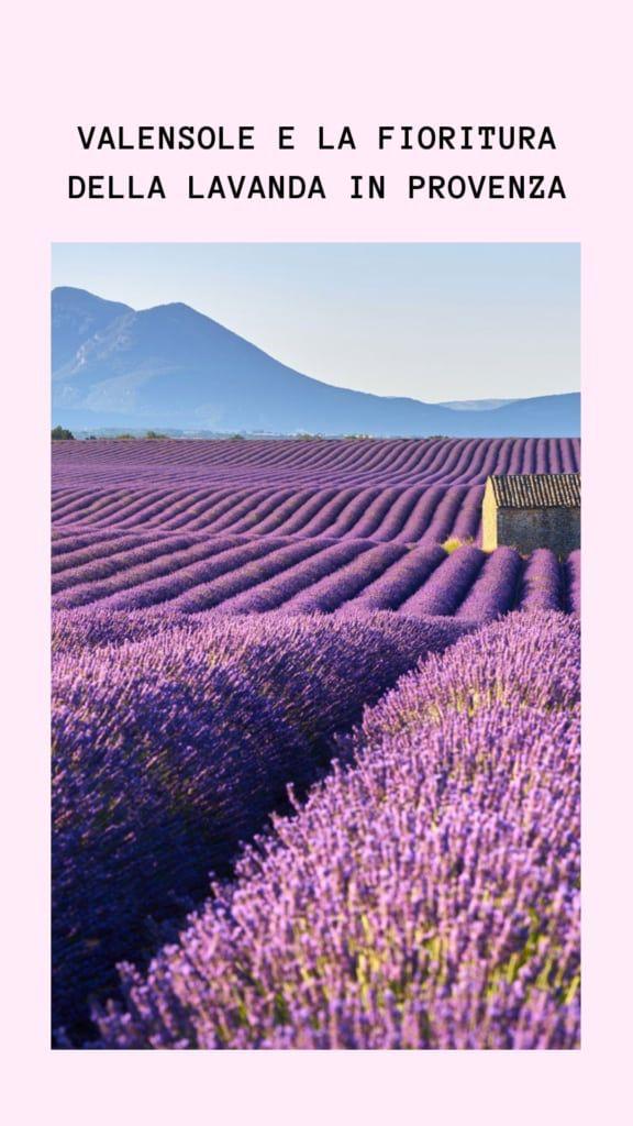immagini-buongiorno-fiori_58