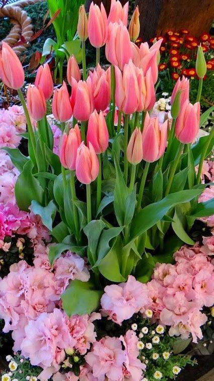 immagini-buongiorno-fiori_60