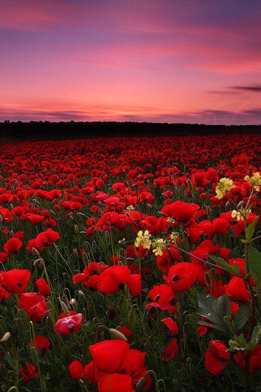 immagini-buongiorno-fiori_65