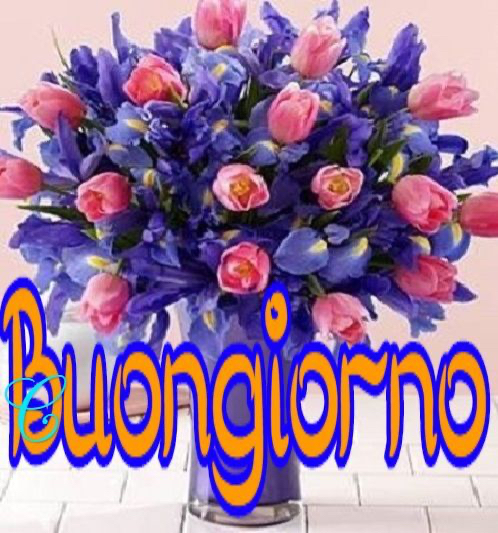 immagini-buongiorno-fiori_67