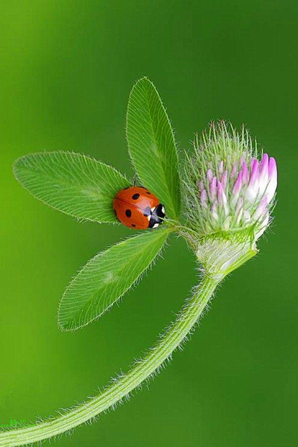immagini-buongiorno-fiori_69