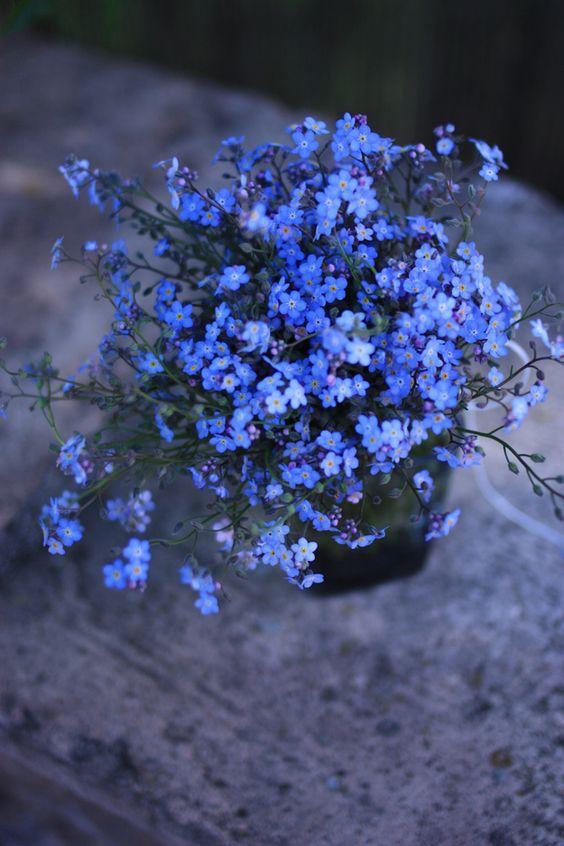 immagini-buongiorno-fiori_73