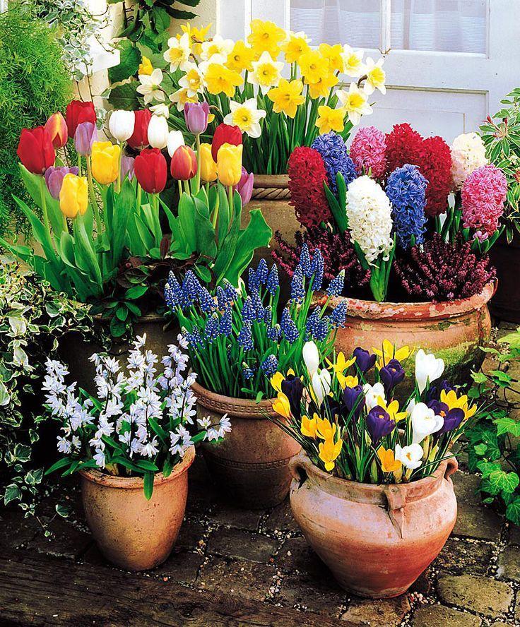 immagini-buongiorno-fiori_75