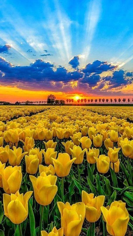 immagini-buongiorno-fiori_78