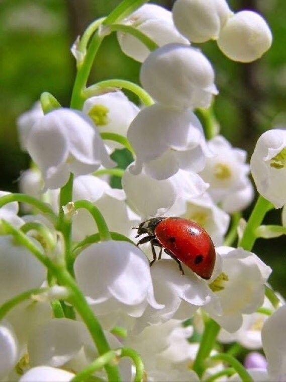 immagini-buongiorno-fiori_80