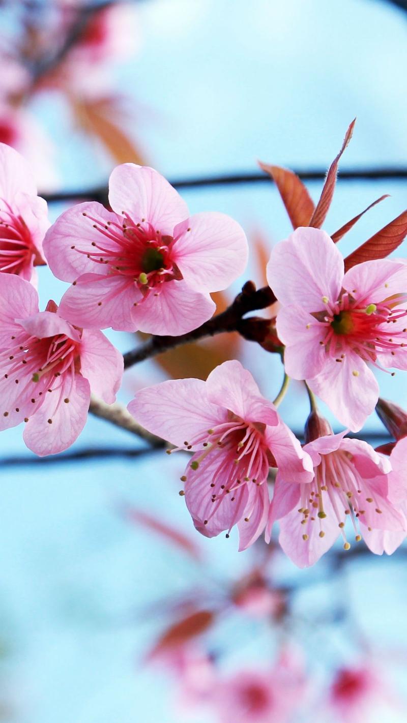 immagini-buongiorno-fiori_82