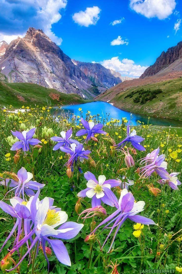 immagini-buongiorno-fiori_83
