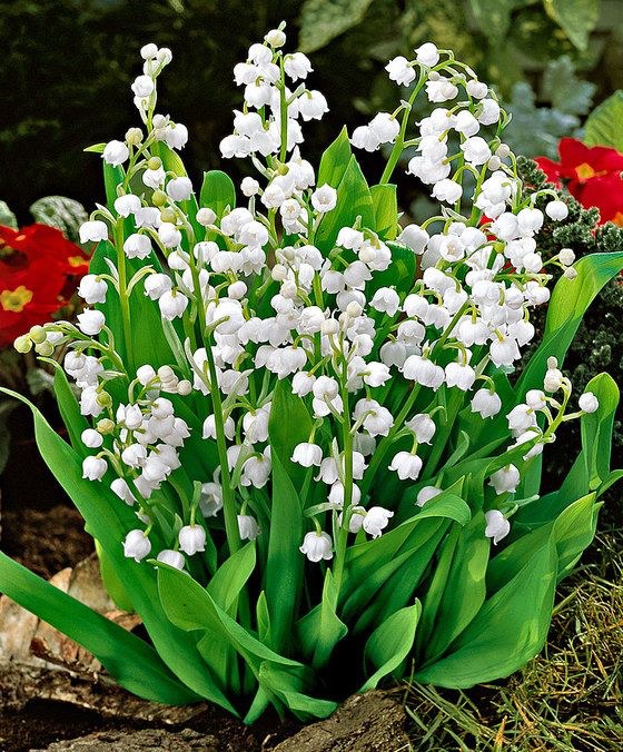 immagini-buongiorno-fiori_84