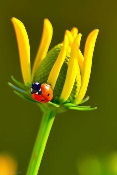immagini-buongiorno-fiori_85