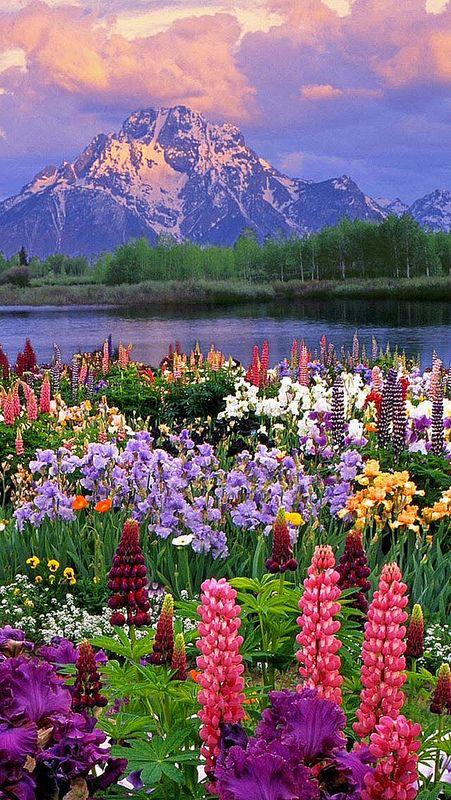 immagini-buongiorno-fiori_87
