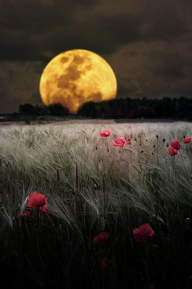 immagini-buona-serata_1192